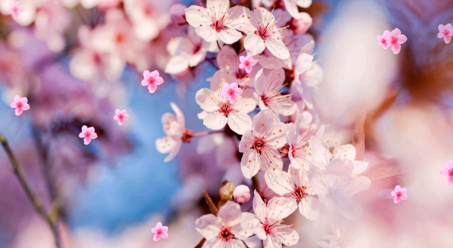 japon çiçeği ile ilgili görsel sonucu